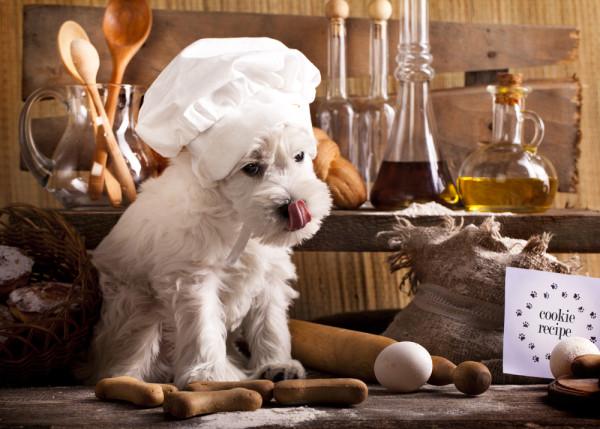 dog-chef-e1384426596531